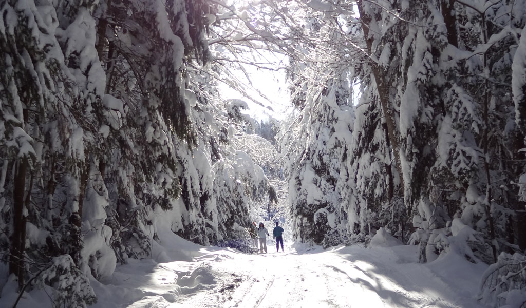 parc-ski-de-fond-3