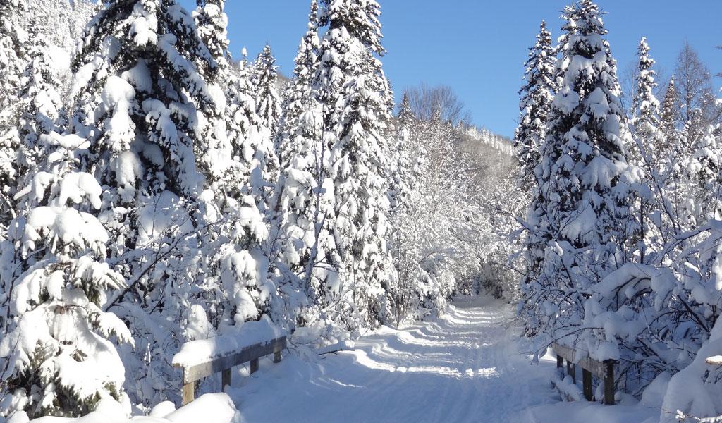 parc-ski-de-fond-5