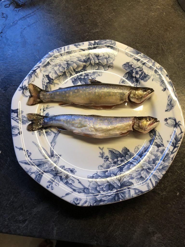Notre prise du midi à la pêche à la truite